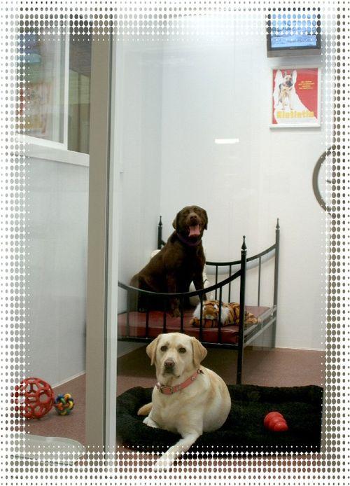 Doggie hotel