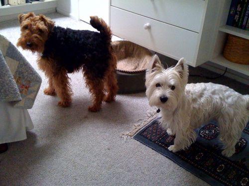 Pups at work