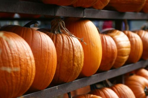 Rack_of_pumpkins